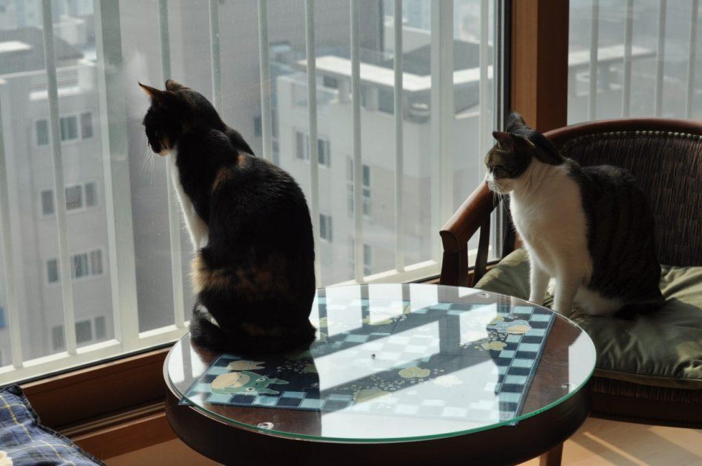 猫メンバ-のうち、お二方は韓国で保護した捨て猫