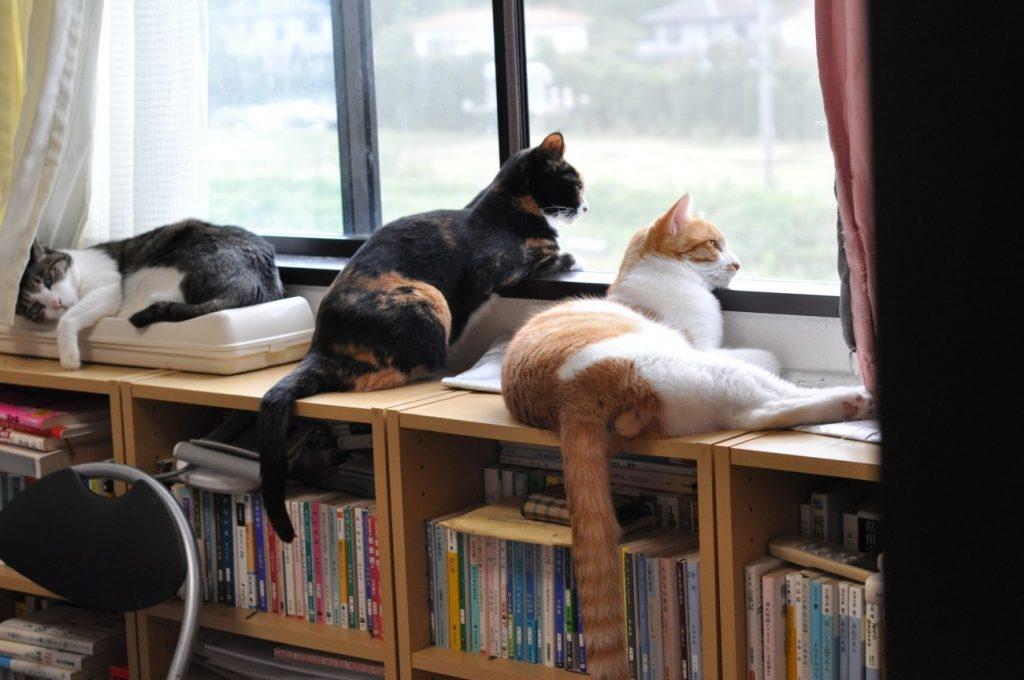 賃貸マンションの窓際から外を眺める猫メンバー